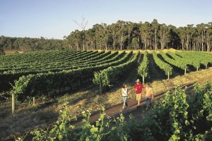 Margaret River Caves Wine and Cape Leeuwin Lighthouse Tour from Perth - Accommodation in Bendigo