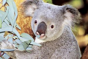 Perth Zoo General Entry Ticket and Sightseeing Cruise - Accommodation in Bendigo