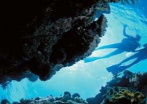 Deep Sea Divers Den - Accommodation in Bendigo